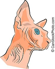 a head of a sphynx cat