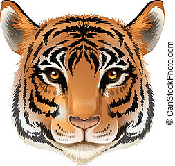 Illustration of a head of a tiger on a white background