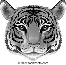 A head of a tiger in grey color