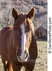 A head shot of a beautiful farm horse