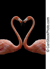A heart composed by two flamingos isolated on black...