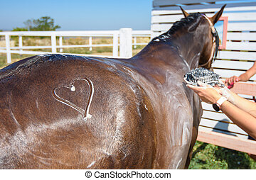 A heart is drawn on the thigh of a horse washed with shampoo