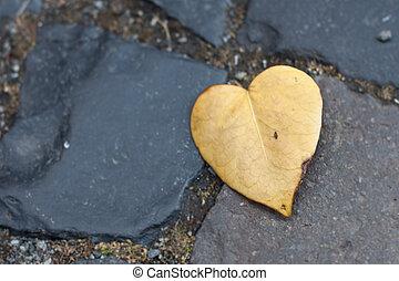A Heart-shaped Leaf