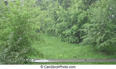 a heavy downpour on a summer day in the Park. Nature