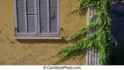A hedge on the front of the house. The vine past the wall of the building. A floating plant wobbles in the wind. Slow motion 4k