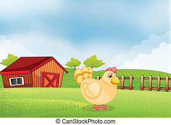 A hen in the farm with a wooden house at the back