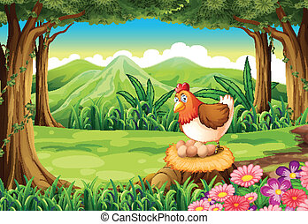A hen laying eggs at the forest