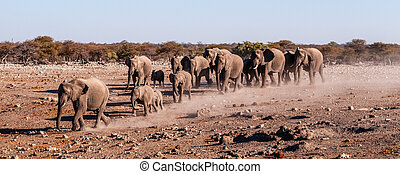 A herd of African Elephants in Namibia