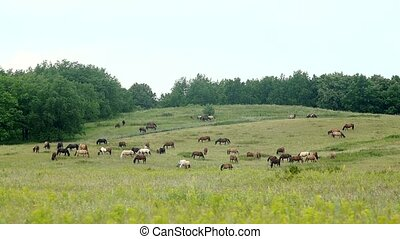 a herd of beautiful horses grazing in the meadow