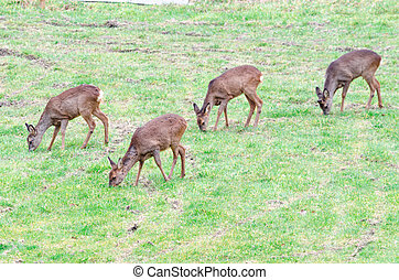 A herd of deer