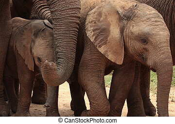A herd of elephants close up