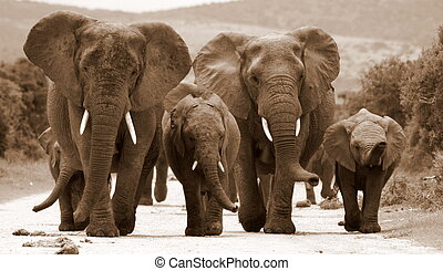 A herd of elephants in monochrome