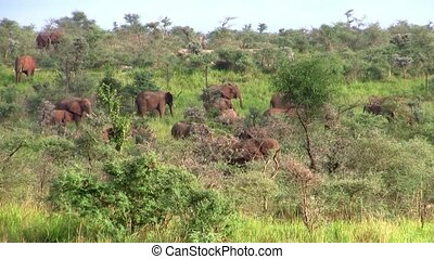 A Herd of Elephants in the Bush
