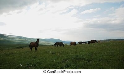 a herd of horses grazes in the mountains