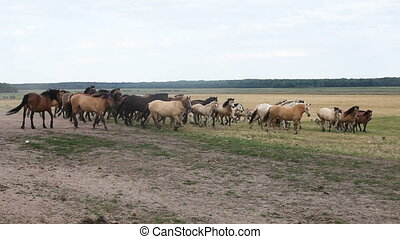 A herd of horses grazing in the field