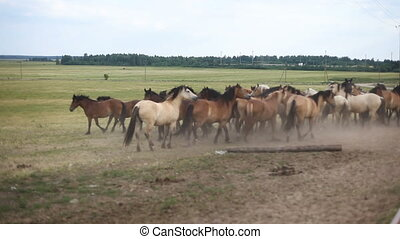 A herd of horses in the pasture