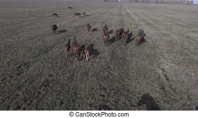 A herd of horses on the field