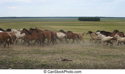 A herd of horses run across the field