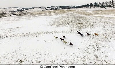 An Aerial view of horses doing what the do best, running