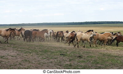 A herd of horses walk around the field