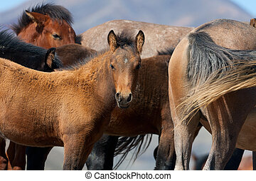 A herd of horses with foals