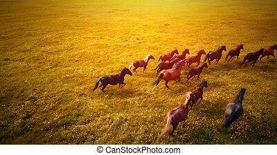 A herd of running horses at sunset