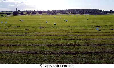A herd of sheep grazing on a lush green field. High quality footage