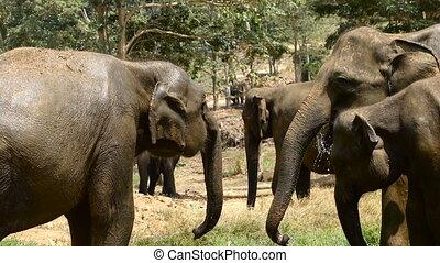 a herd of wild elephants