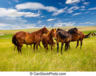 Free horses in the steppe