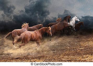 A herd of wild horses