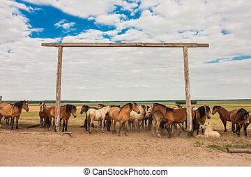a, herde pferde, in, der, weide