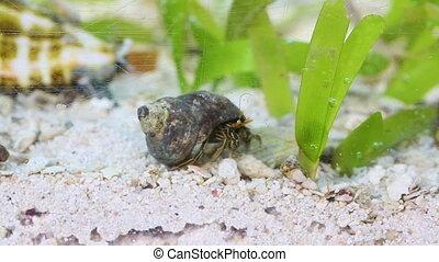 A hermit crab in an aquarium - A scenic shot of a hermit...