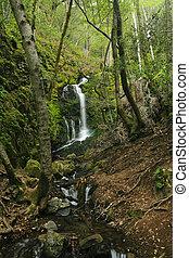 A hidden waterfall in the lush rain forest of Uvas Canyon, California