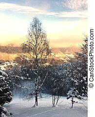 A high birch tree in snowy landscape on the Italian Alps
