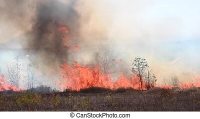A high fire burns dry grass and reeds with wheat within the boundaries of a small town. Fire and natural disaster. Large flames and thick black smoke.
