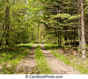 A hiking trail in the woods
