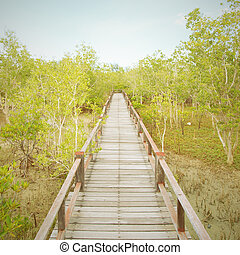 a, holzbrücke, auf, mangrovenbaum, wald