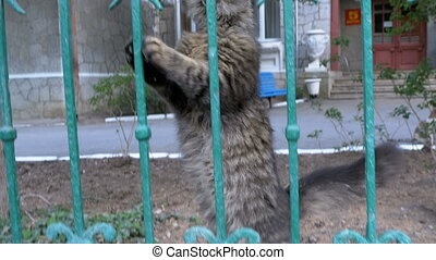 A homeless gray cat walks in the park outside the fence and...
