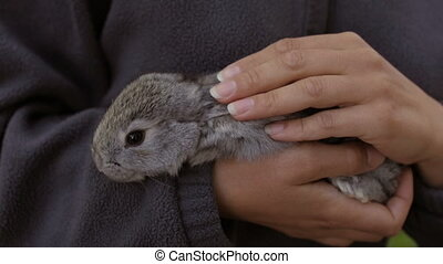 A homemade rabbit in the hands of a woman - A woman stroking...