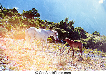 A horse family on the mountain by the Llogara pass in Vlora, with a background of clouds.