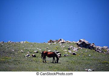 A horse feeding in the meadoe