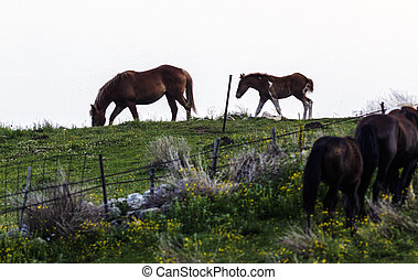 A horse following its mother