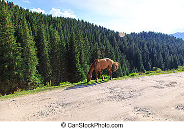 A horse grazes on a mountain road. Agriculture, summer grazing in the village. wild nature