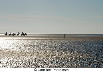 A horse in the low tide