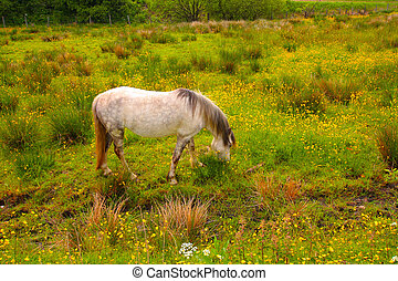 A horse in the meadow