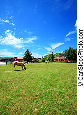 A horse ranch with a house and fence. - A horse ranch in...