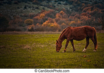 A horse stands on a field against a background of wood