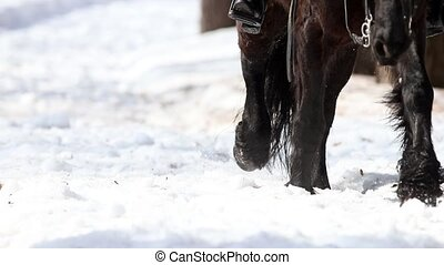 A horse walking on a snowy ground. Mid shot
