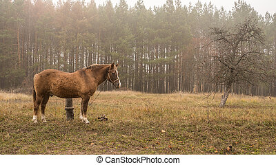 A horse walks in the field
