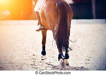 A horse, with a rider in the saddle, galloping through an arena, and hooves pounding on the sand, which is illuminated by bright sunlight.